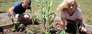 Lenora gardener